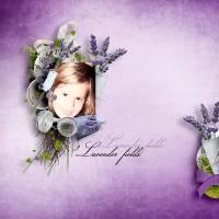 CT_Bee_Lavenderfields.jpg