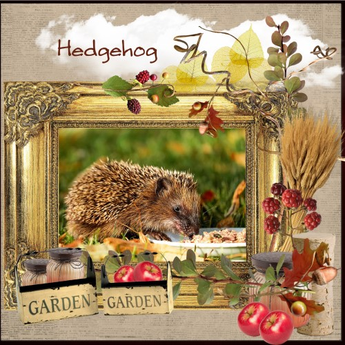 Nov.2016 - Hedgehog