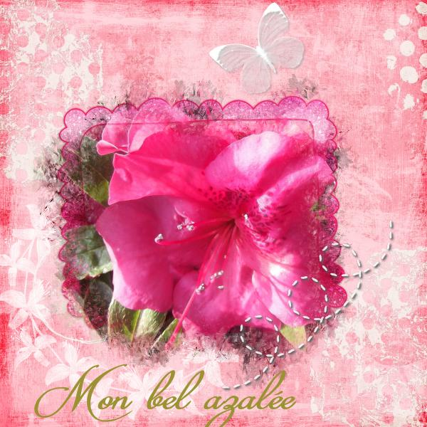 id_e_14_03_15_fleur_rose