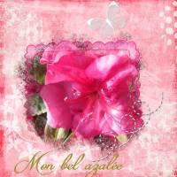 id_e_14_03_15_fleur_rose.jpg