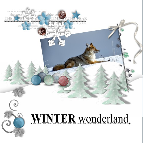 Dec.2016 - lo 4 - Winter wonderland - coyote
