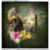 Butterflying2-LiMa.jpg
