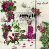 Pink_velvet_II.jpg