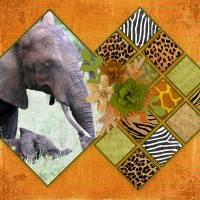 Safari-day-2-web.jpg