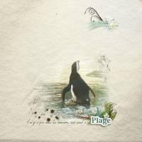 pingouinplage.jpg
