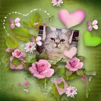 tctpagesbg_pinkmilkshake1kopie.jpg