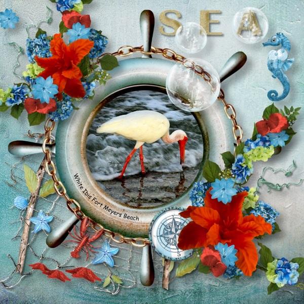 Sea dreaming White Ibis
